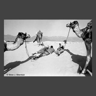 Sinai March 1983 (19) 25A